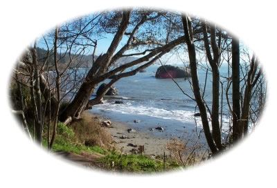 Photo: looking at the ocean through the trees - Trinidad, CA